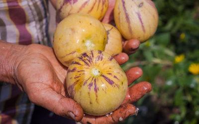 Los alimentos ecológicos son más nutritivos