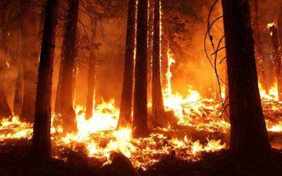 Amazonía en llamas: una edición especial para informarse e involucrarse
